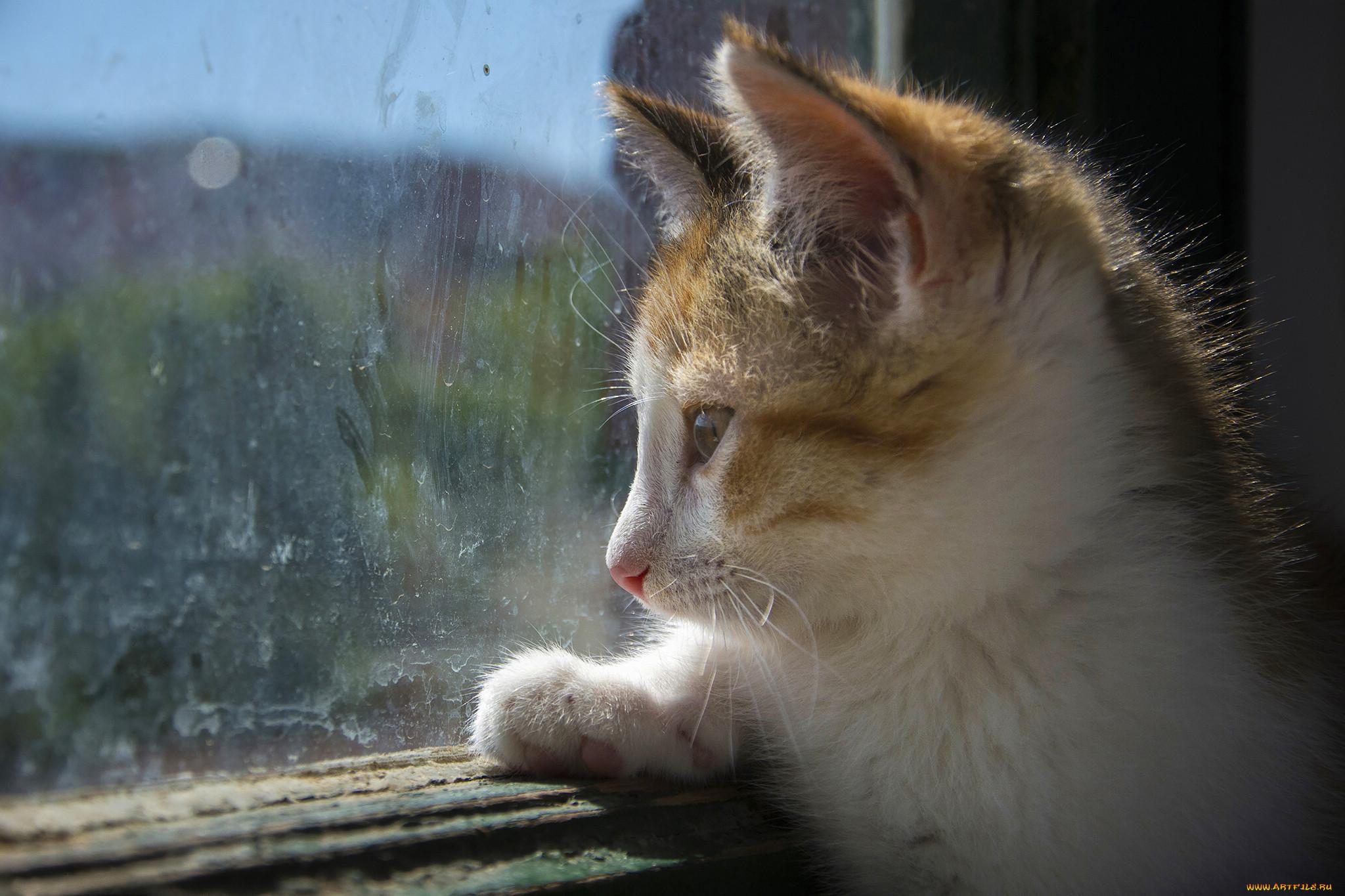 картинки тоскующий кот данному